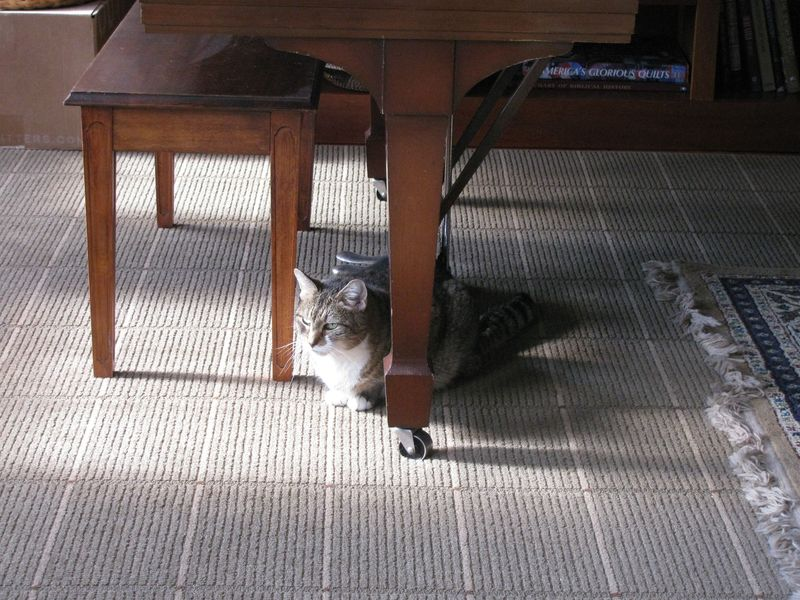 Peanut under piano