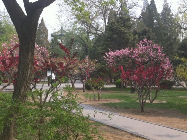 Spring in ritan