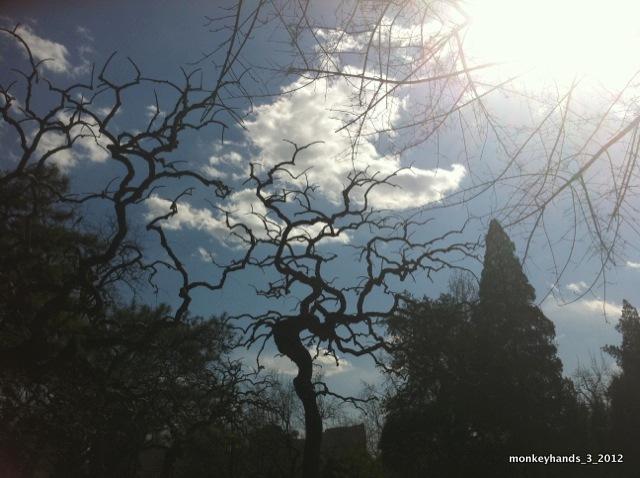 Ritan part trees2