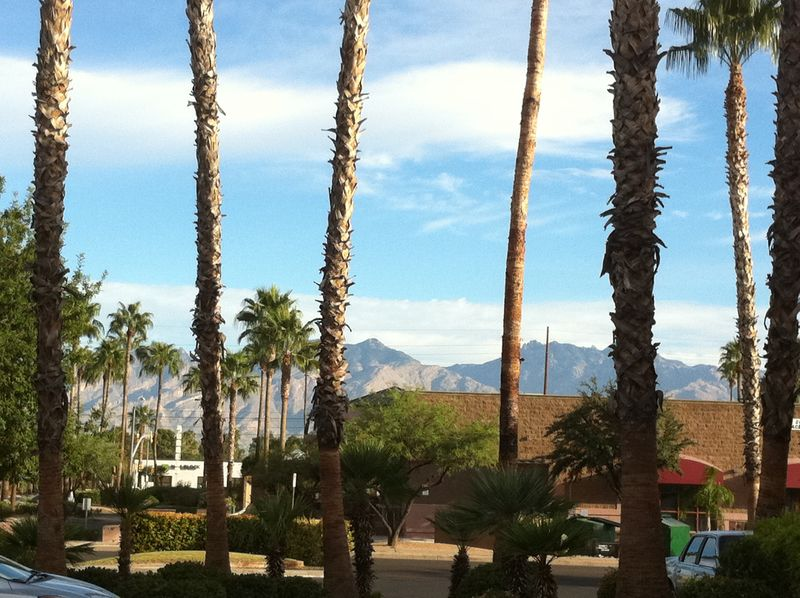 Coffee shop view tucson